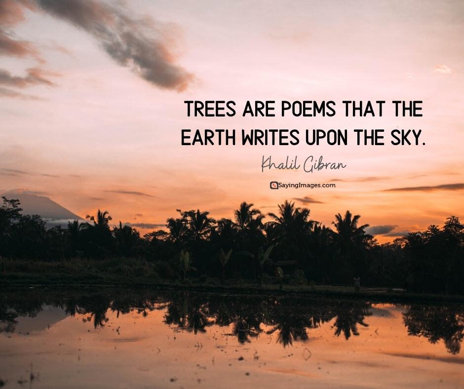 tree poems quotes