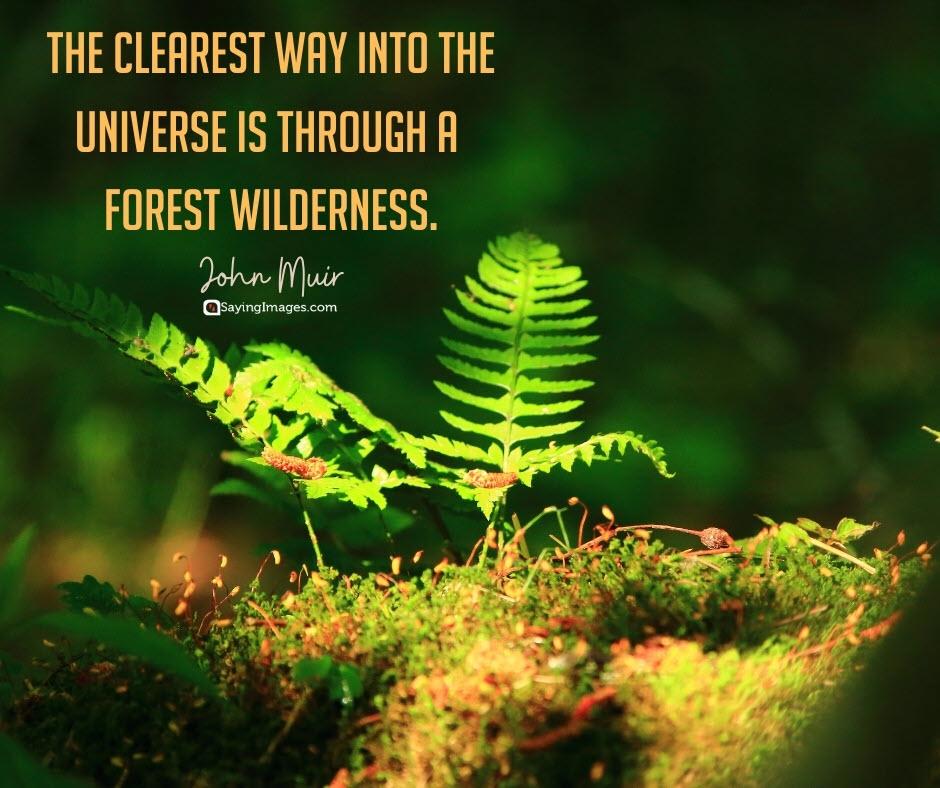 tree wilderness quotes