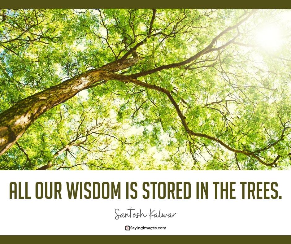 tree wisdom quotes